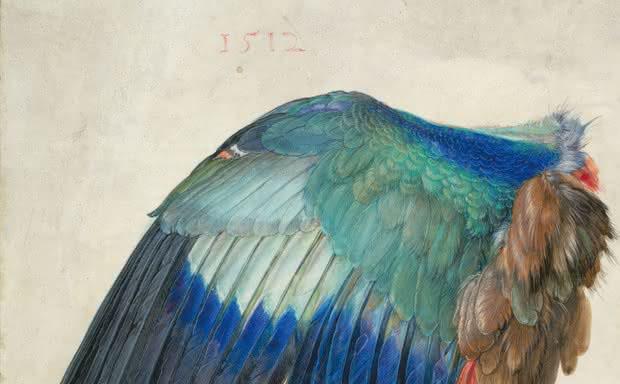 """Błękitne skrzydło ptaka"" (1500 lub 1512) | © Albertina, Wien"